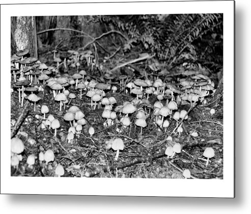 Black Metal Print featuring the photograph Caterpillars Playground 1 by J D Banks
