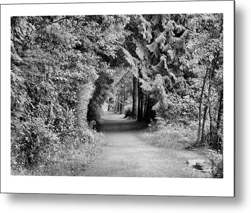 Tunnel Metal Print featuring the photograph Forest Tunnel by J D Banks