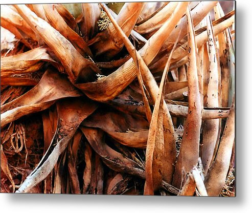 Roots Metal Print featuring the photograph My Roots by Heather S Huston