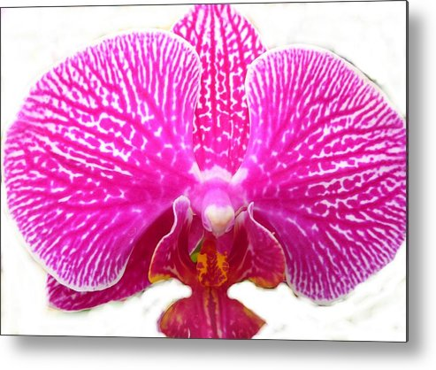 Flower Metal Print featuring the photograph Orchid I Pretty by Florene Welebny