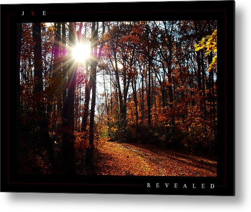 Forest Metal Print featuring the photograph Revealed by Jonathan Ellis Keys