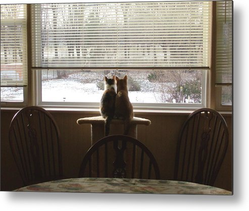 Cats Metal Print featuring the photograph Samson And Delilah by Peggy King