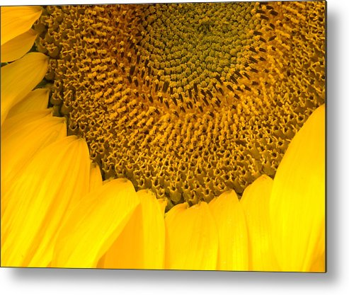 Sun Metal Print featuring the photograph Sunflower by Charlie Hunt