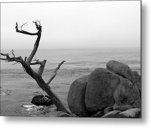 Tree Metal Print featuring the photograph Tree And Boulder by Kenna Westerman