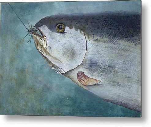 Fish Metal Print featuring the painting What's For Dinner by Scott Plaster