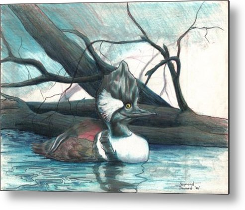 Duck Merganser Duck Pond Water Lake Birds Nature Wildlife Metal Print featuring the drawing Merganser Duck by Raymond Doward