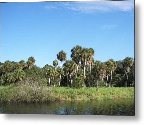 Florida Metal Print featuring the photograph Myakka River by Charles Yates