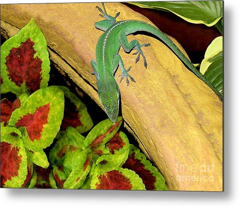 Nature Metal Print featuring the photograph Anole Having A Drink by Lucyna A M Green