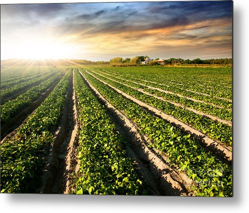 Agricultural Metal Print featuring the photograph Cultivated Land by Carlos Caetano