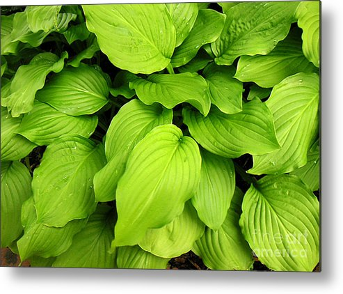 Nature Metal Print featuring the photograph Greens Only by Lucyna A M Green