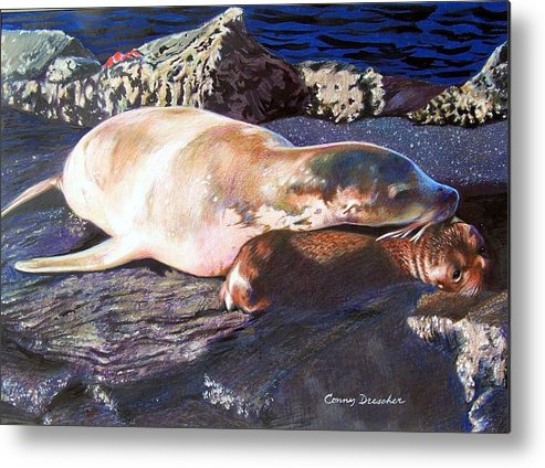 Sea Lion Metal Print featuring the mixed media Mother And Child Sea Lion by Constance Drescher