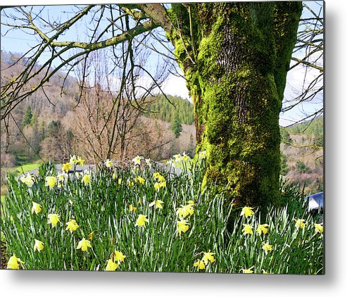 Yellow Metal Print featuring the photograph Spring Is Here by Margaret Hood
