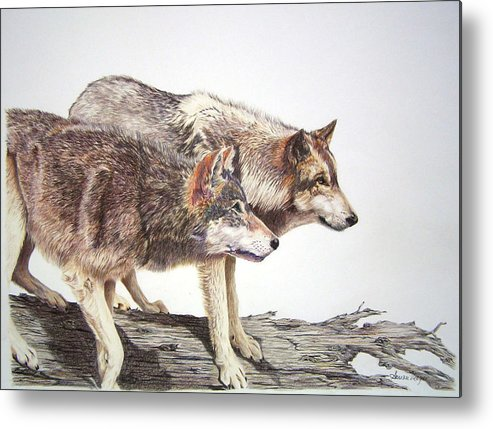 Animals Metal Print featuring the drawing Focus by Susan Moyer