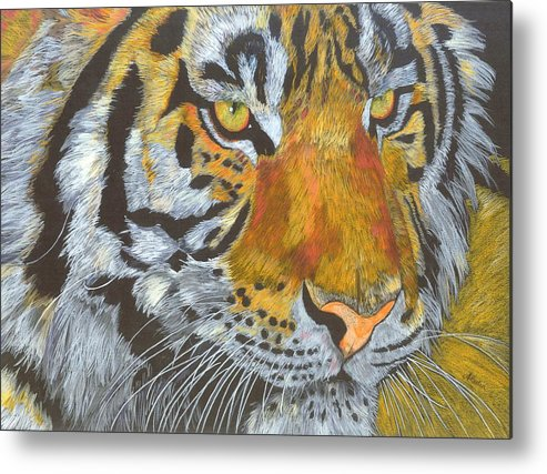 Tiger Metal Print featuring the drawing Tigress by Angela  Cater