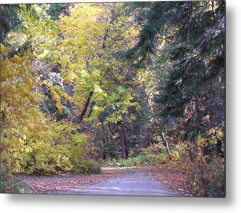 Autumn Photographs Metal Print featuring the photograph Autum Colors by Louise Magno