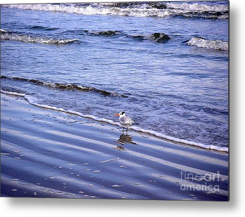 Nature Metal Print featuring the photograph Creatures Of The Gulf - Seaing And Wading by Lucyna A M Green