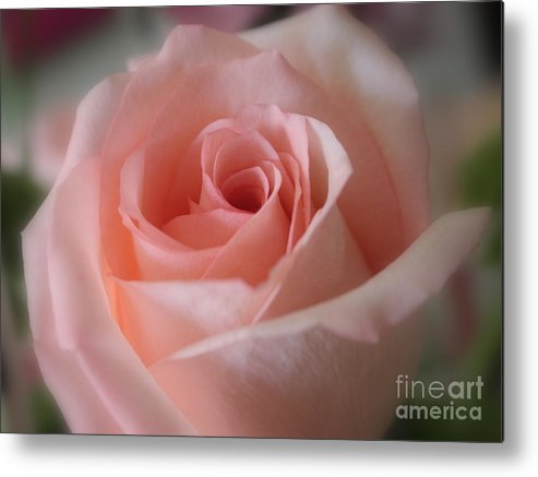 The Power Of Pink Metal Print featuring the photograph Delicate Pink Rose by Carol Groenen