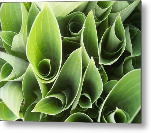 Hostas Green Leaves Circles Garden Plants Metal Print featuring the photograph Hostas 5 by Anna Villarreal Garbis