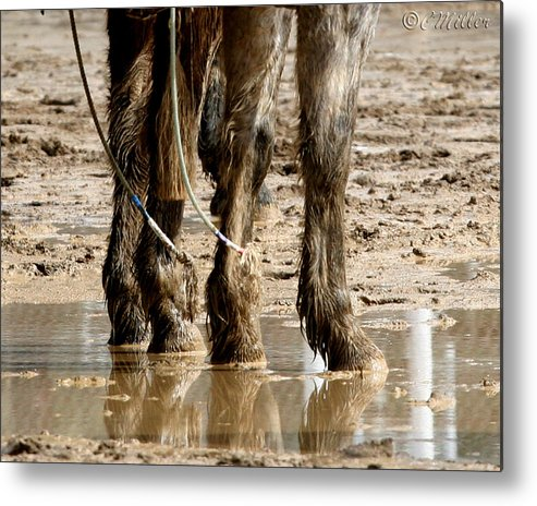 Western Metal Print featuring the photograph Muddy Reflections.. by Carol Miller