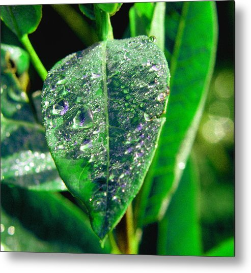 Leaf Metal Print featuring the photograph 022707-3 by Mike Davis