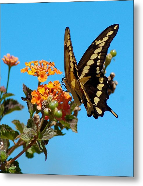 Butterfly Metal Print featuring the photograph Butterfly IIi by Susan Heller