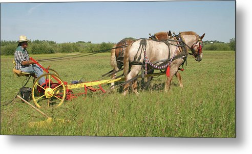 Horizontal Metal Print featuring the photograph Cutting Hay by Jack Dagley