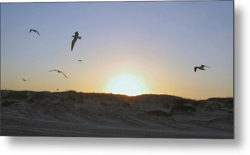 Seagull Metal Print featuring the photograph Seagulls At Sunset 2 by Camera Candy