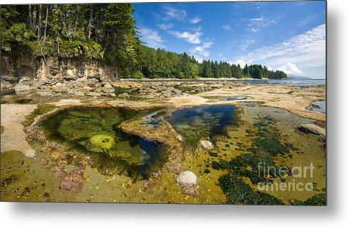 Botanical Beach Metal Print featuring the photograph Botanical Beach by Matt Tilghman