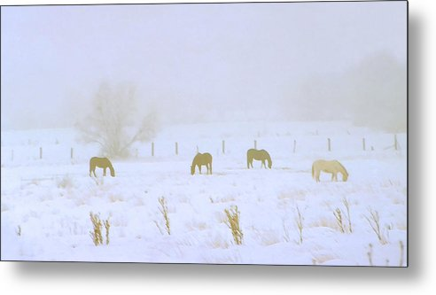 Fog; Mist; Foggy; Misty; Landscapes; Scenery; Scenic; Atmospheric; Snow; Snowy; Winter; Wintry; Cold; Seasons; Seasonal; Weather; Horses; Animals; Farming; Agricultural; Farms; Rural; Country; Farm Animals; Grazing; Grazing Horses; Field; Four Metal Print featuring the photograph Horses Grazing In A Field Of Snow And Fog by Steve Ohlsen