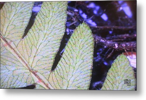 Microscopic Metal Print featuring the photograph Leaf by Michele Caporaso