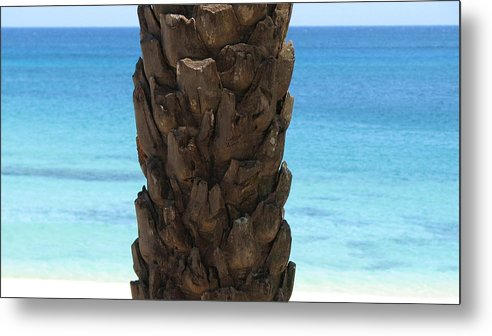 Palm Metal Print featuring the photograph Palm by Kathryn Carlin
