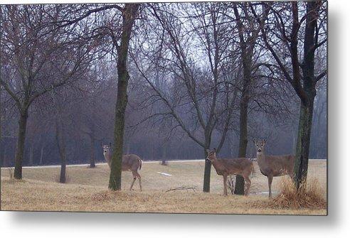Deer Metal Print featuring the photograph Visitors by Anna Villarreal Garbis