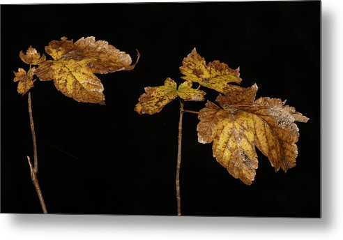 Forest Metal Print featuring the photograph Autumn Leaves by Masami Iida