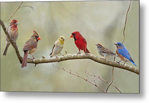 Finch Metal Print featuring the photograph Bird Congregation by Bonnie Barry