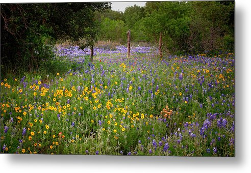 Landscape Metal Print featuring the photograph Floral Pasture No. 2 by Jon Holiday