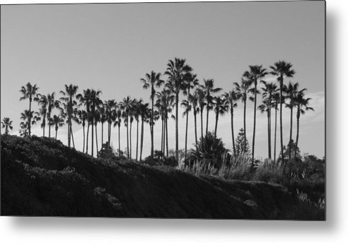 Landscapes Metal Print featuring the photograph Palms by Shari Chavira
