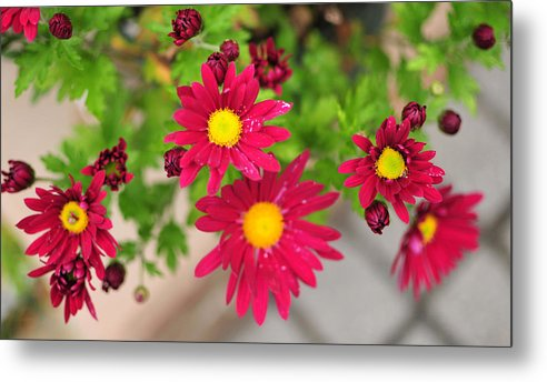 Flower Red Yellow Flowers Aperature Metal Print featuring the photograph Untitled by Brian Foxx
