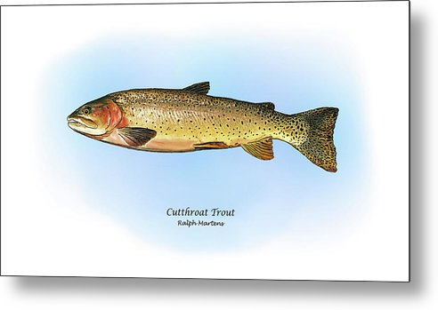 Cutthroat Trout Metal Print featuring the painting Cutthroat Trout by Ralph Martens