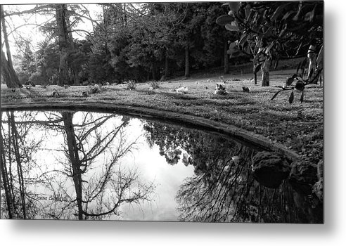 Water Metal Print featuring the photograph At Peace by Donna Blackhall