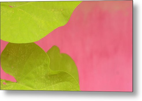 Color. Abstract Metal Print featuring the photograph Green On Pink 1 by Art Ferrier
