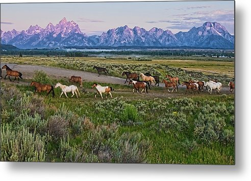 Horizontal Metal Print featuring the photograph Horses Walk by Jeff R Clow