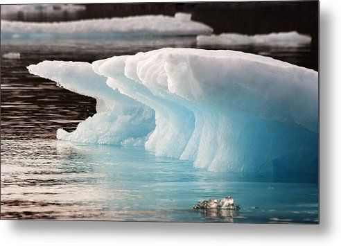 Iceberg Metal Print featuring the photograph Ice Bears by Elisabeth Van Eyken