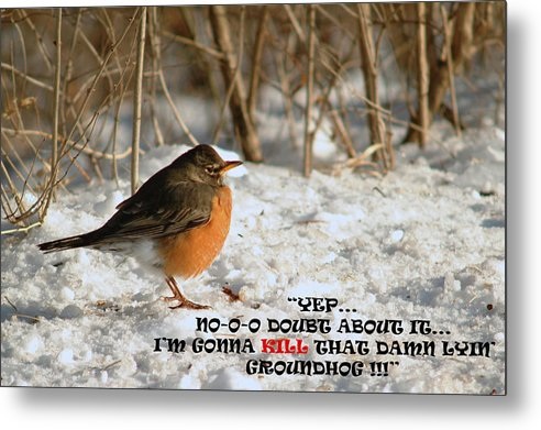 Robin Metal Print featuring the photograph 020411-112  Back Too Soon by Mike Davis
