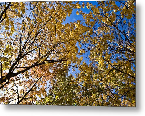 Trees Metal Print featuring the photograph A Little Blue by Vadim Grabbe