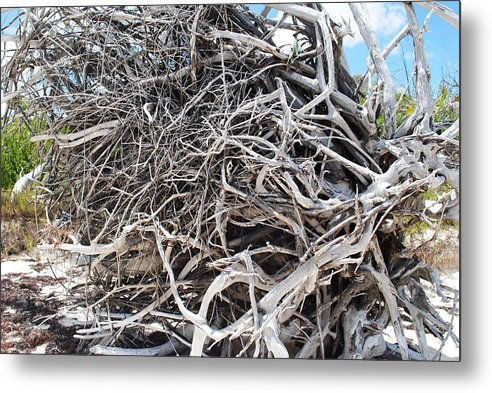 Metal Print featuring the photograph Australian Roots by Karla Kernz