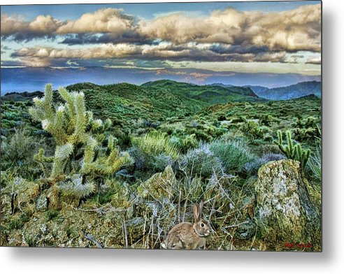 Metal Print featuring the photograph Cactus Rabbit by Blake Richards