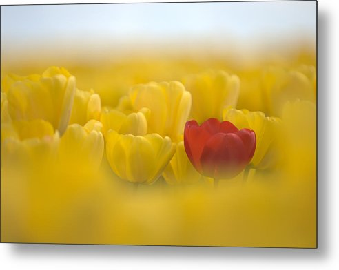 Flower Metal Print featuring the photograph Red In Yellow L085 by Yoshiki Nakamura