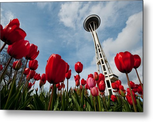 Seattle Metal Print featuring the photograph Tulips In Seattle H081 by Yoshiki Nakamura