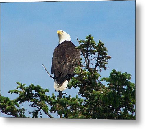 American Metal Print featuring the photograph American Bald Eagle by Mark Cheney