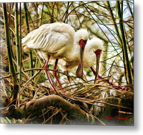 Metal Print featuring the photograph Birds Of A Feather by Blake Richards